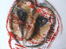Tasmanian Masked Owl (tyto castanops)