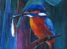 The Kingfisher Series No8